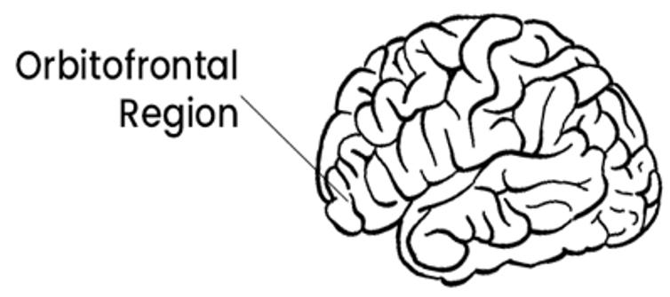 Diagram highlighting the orbitalfrontal region of the brain