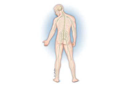 La espasticidad y la lesión cerebral traumática